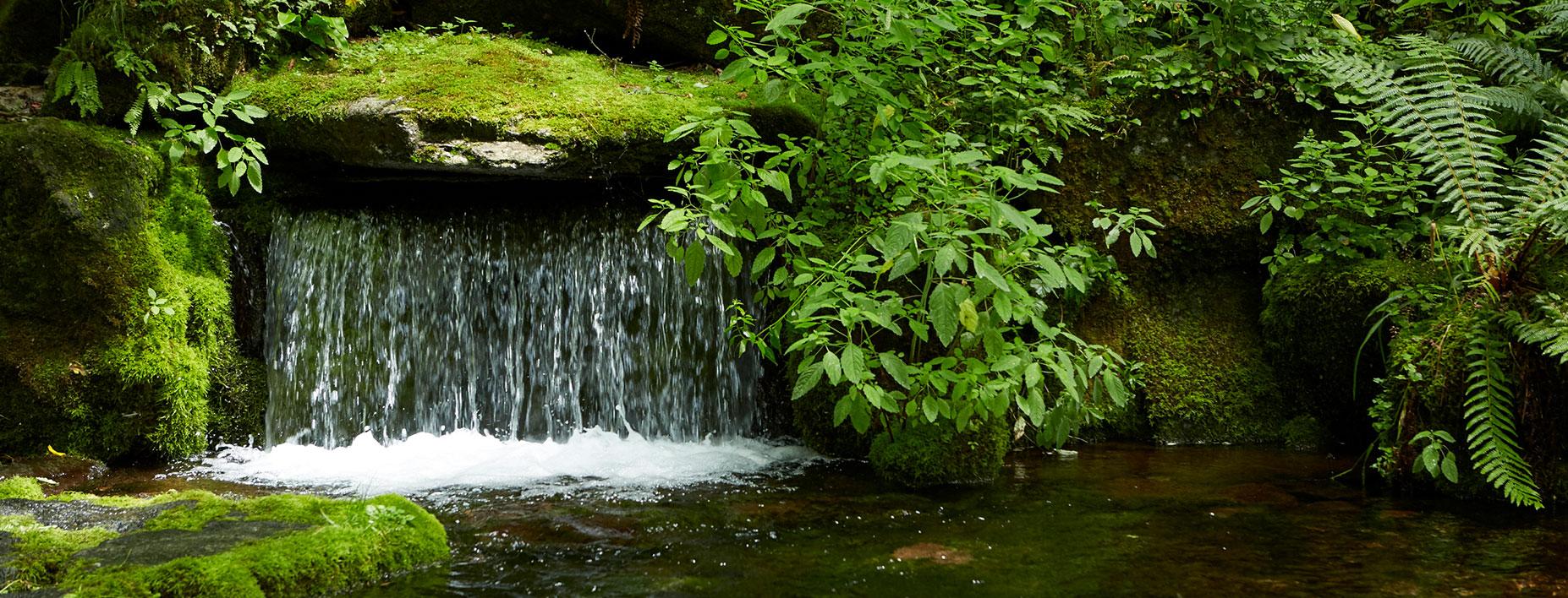 毎日が天然水